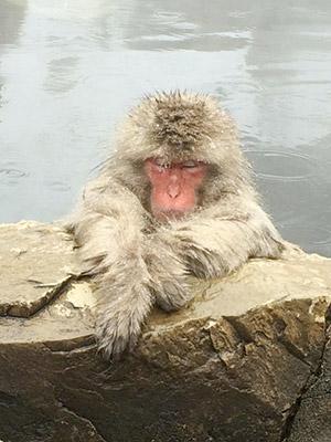 猿は人間に近いせいか、妙に温泉が似合いますね。