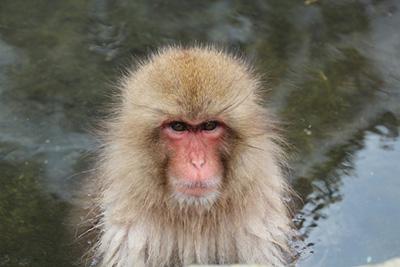 この猿は眼光がなかなかするどくてイケメン