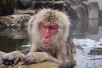 温泉の気持ちよさには敵わないという感じが可愛いです