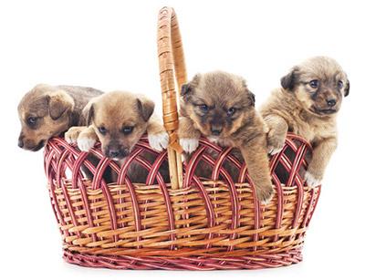年賀状フリーイラスト犬 2018年は無料素材を使い倒そう!