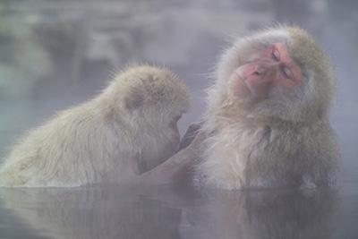 毛繕いをしている猿って可愛いですよね