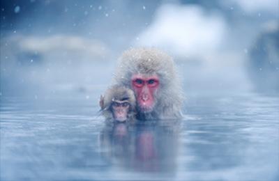 湯けむりと雪が良い感じに風情