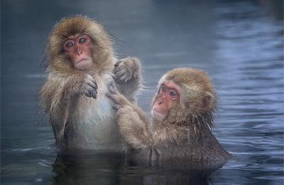 毛繕い中の猿のカップル