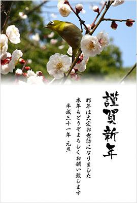 新春花色年賀状デザイン画像2