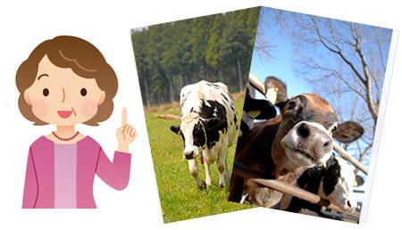 年賀状フリーイラスト牛 2021年は無料素材を使い倒そう!